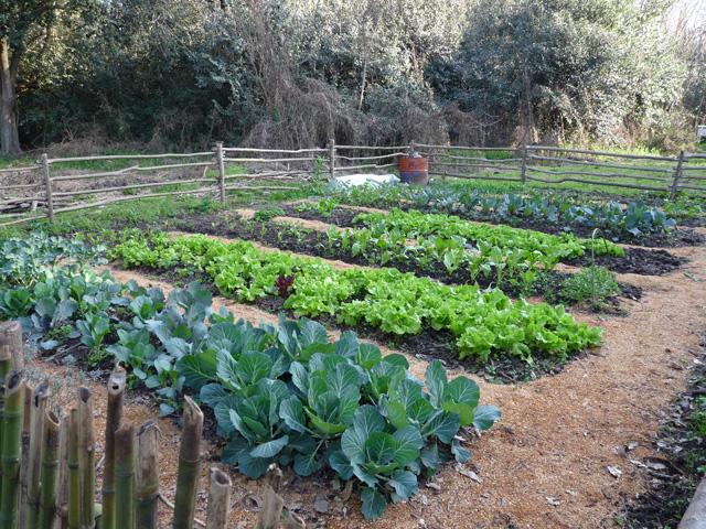 Galer a huerta org nica el sembrador for Plantas para huerta organica