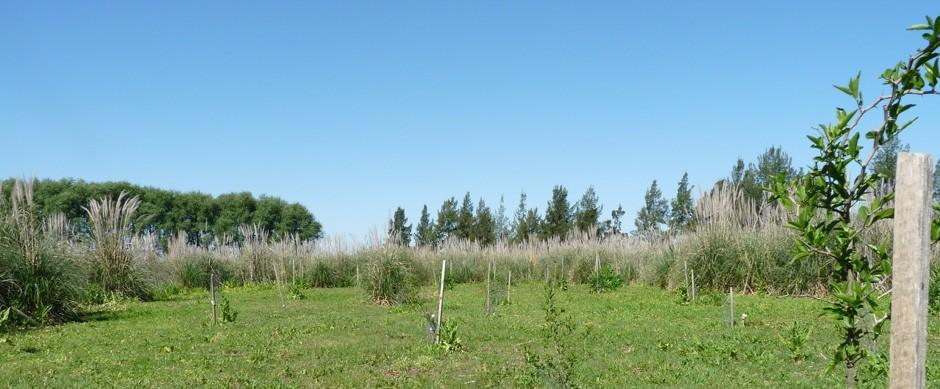 Bosque San Andrés