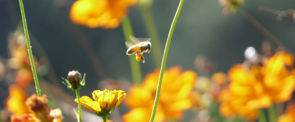 La huerta orgánica, aves de corral y el maravilloso mundo de las abejas
