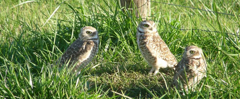 Observación de aves silvestres